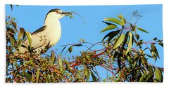 Black Crowned Night Heron Beach Towel