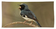 Black-throated Blue Warbler Beach Towel by Alan Lenk
