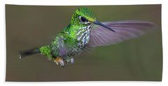 Booted Racket-tail Beach Sheet