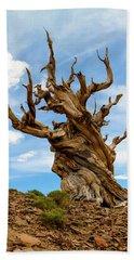 Bristlecone Pine Tree 3 Beach Sheet