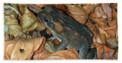 Cane Toad Beach Towel