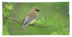 Cedar Waxwing Beach Sheet by Alan Lenk