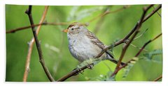 Beach Towel featuring the photograph Chipping Sparrow by Tam Ryan
