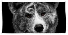 Closeup Portrait Of Akita Inu Dog On Isolated Black Background Beach Towel by Sergey Taran