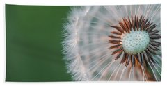 Dandelion Beach Sheet