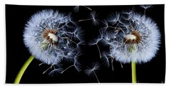 Beach Sheet featuring the photograph Dandelion On Black Background by Bess Hamiti