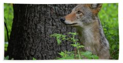 Early Morning Coyote In Maine Beach Towel