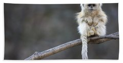 Golden Snub-nosed Monkey Rhinopithecus Beach Sheet by Cyril Ruoso