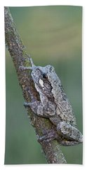 Gray Tree Frog Beach Towel