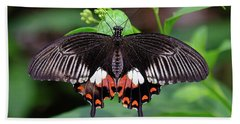 Great Mormon Butterfly Beach Sheet by Ronda Ryan