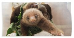 Beach Towel featuring the photograph Hoffmanns Two-toed Sloth Choloepus by Suzi Eszterhas