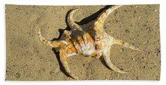 Beach Towel featuring the photograph Lambis Arthritica Spider Conch by Frank Wilson