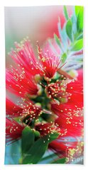 Little John Dwarf Bottlebrush Bloom Beach Towel