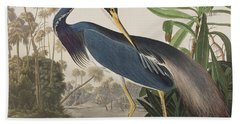 Louisiana Heron  Beach Towel by John James Audubon