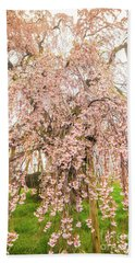 Beach Sheet featuring the photograph Miharu Takizakura Weeping Cherry03 by Tatsuya Atarashi