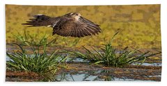 Beach Towel featuring the photograph Mourning Dove In Flight by Tam Ryan
