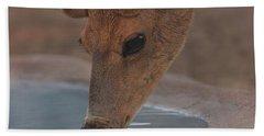 Mule Deer  Beach Towel