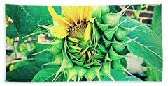 Beach Towel featuring the photograph Peeping Sunflower by Angela Annas