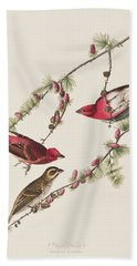 Purple Finch Beach Towel by John James Audubon