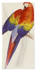 Red And Yellow Macaw Beach Towel by Edward Lear