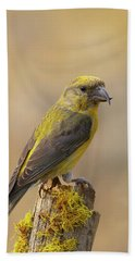 Red Crossbill Beach Towel by Doug Herr