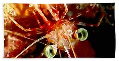 Red Night Shrimp Beach Sheet