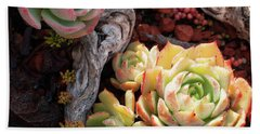 Succulents Beach Sheet