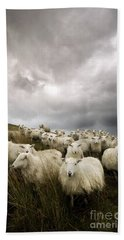 Welsh Lamb Beach Sheet by Angel  Tarantella