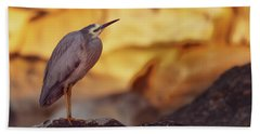 White-faced Heron At The Beach Beach Towel