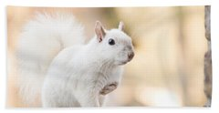 White Squirrel Beach Sheet