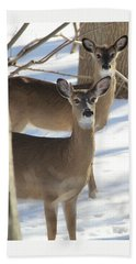 White Tailed Deer Smithtown New York Beach Sheet