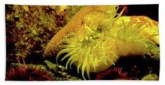 Sea Urchins Beach Sheet