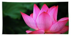 Blossoming Lotus Flower Closeup Beach Sheet