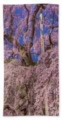 Beach Towel featuring the photograph Miharu Takizakura Weeping Cherry25 by Tatsuya Atarashi