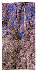 Beach Sheet featuring the photograph Miharu Takizakura Weeping Cherry25 by Tatsuya Atarashi