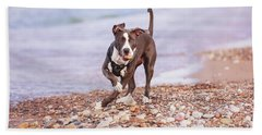 Beach Sheet featuring the photograph American Pitbull Terrier by Peter Lakomy