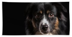Australian Shepherd Beach Towel by Verena Matthew
