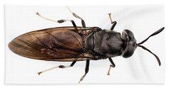 black soldier fly species Hermetia illucens Beach Towel