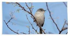 Black-tailed Gnatcatcher Beach Sheet