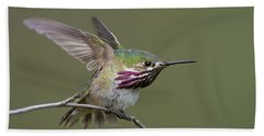 Calliope Hummingbird Beach Sheet by Doug Herr