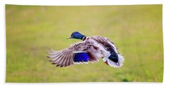 Duck-drake Beach Towel