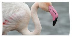 Greater Flamingo Phoenicopterus Roseus Beach Towel