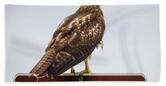Beach Towel featuring the photograph Juvenile Red-tailed Hawk by Ricky L Jones