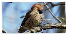 Beach Towel featuring the photograph Northern Flicker Woodpecker by Robert L Jackson