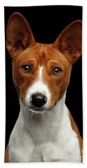 Pedigree White With Red Basenji Dog On Isolated Black Background Beach Sheet by Sergey Taran