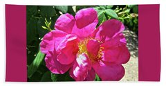 Beach Sheet featuring the photograph Pink Rose by Stephanie Moore