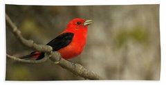Scarlet Tanager Beach Sheet by Alan Lenk
