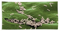 Sem Of E. Coli Bacteria On Lettuce Beach Towel
