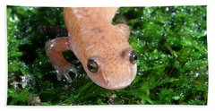Spring Salamander Beach Towel by Ted Kinsman
