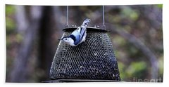 Beach Towel featuring the photograph White Breasted Nuthatch  by Yumi Johnson